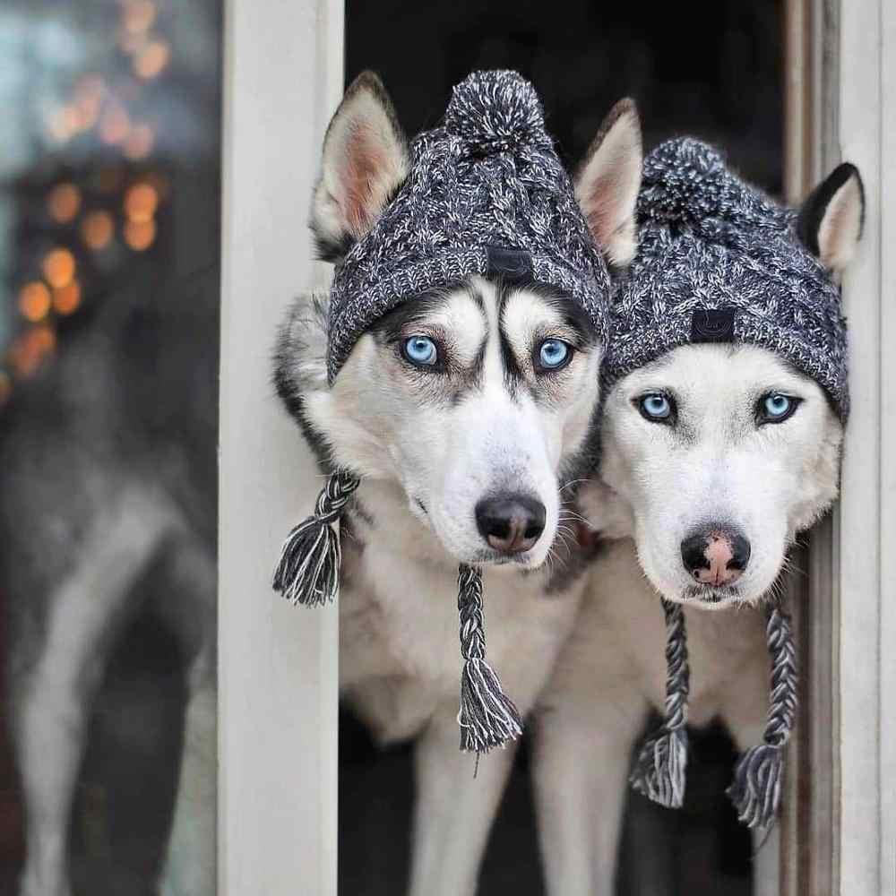 Gobbuy Winter warme gestrickte M/ütze Schal f/ür Hunde Hunde H/üte Haustiere Produkte Lustige Cosplay Hund Cap F/ür Chihuahua Welpen zube Geburtstag