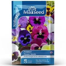 American Heirloom MARSEED Pansy Flower  Seedsplants Seedling Garden Outdoor