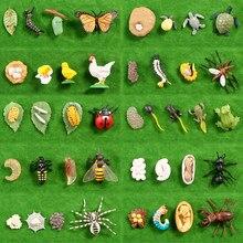 Betterfly abelha sapo crescer ciclo de vida modelo conjunto figuras de ação brinquedos, estatueta montessori ensino brinquedos educativos para crianças