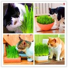 1000 шт кошачья трава растение съедобное Лемонграсс кухонный растительный бонсай лекарственное использование зернистые бобовые капусты DIY домашний сад