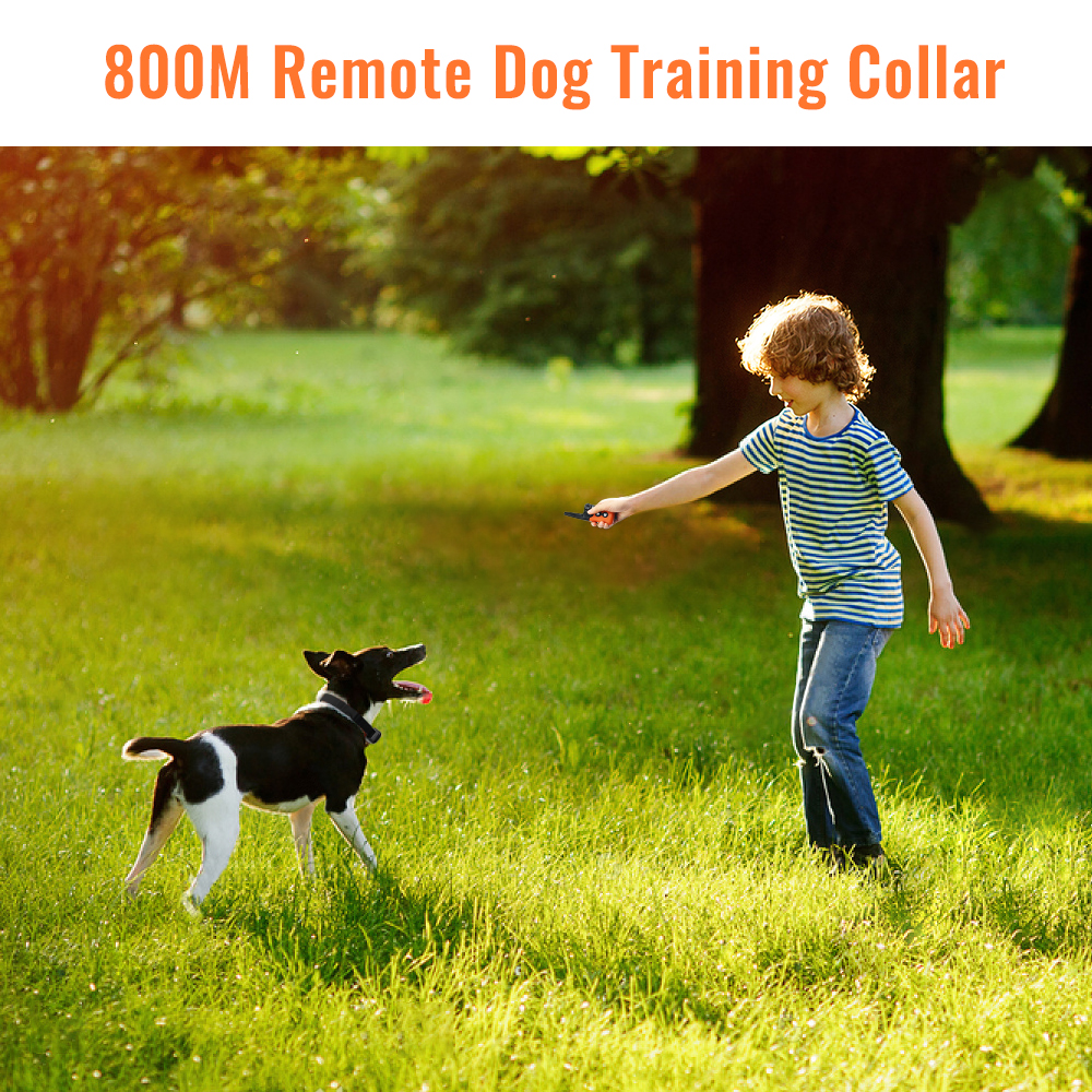 PETRAINER 619A 1 800M Remote Controlled Electric Dog Training Collar with Vibration and Beep 1