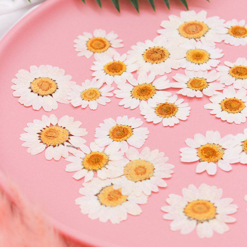 70 PCS Real Dried Pressed Flowers Leaf Plant Herbarium for Resin Jewelry Making Pink Daisy