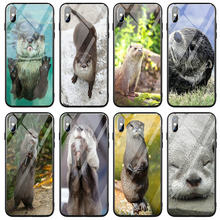 Cute Otter Muzzle Tongue Out For iPhone 5 5S SE 6 6s 7 8 Plus X XR XS 11 Pro Max Case Tempered Glass Phone Cases(China)