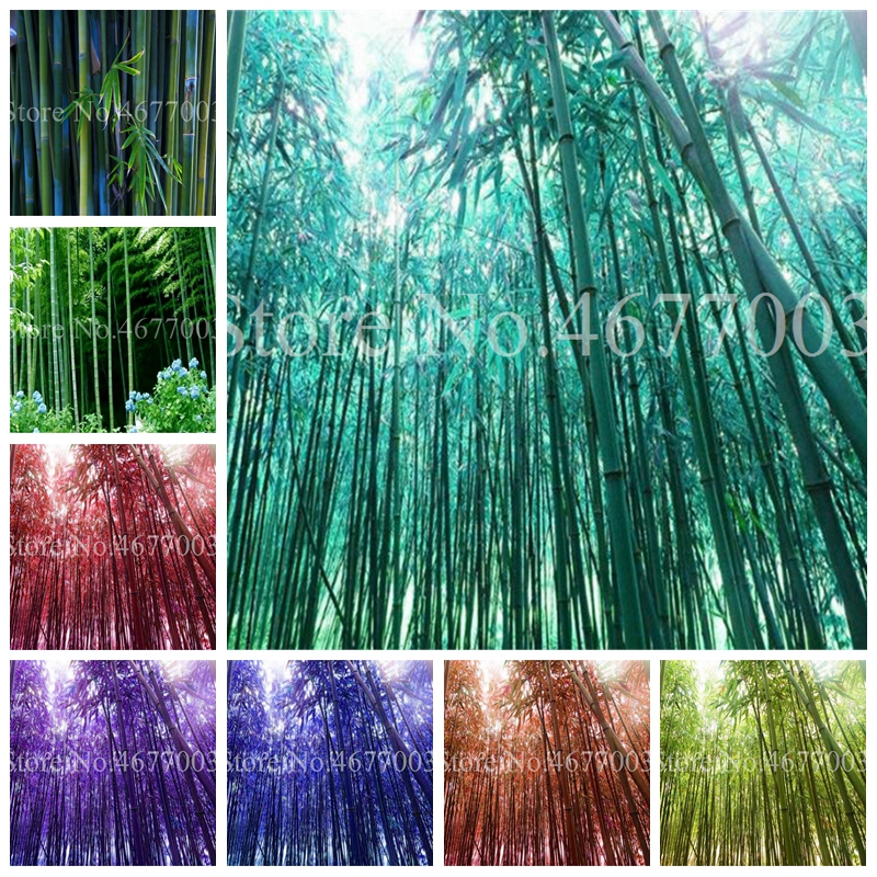 20 Pcs/ Bag Bamboo Bonsai Plant Fresh Giant Rainbow Bamboo Bambu Plant Bambusa Lako Tree Plant Perennial Plant For Home Garden