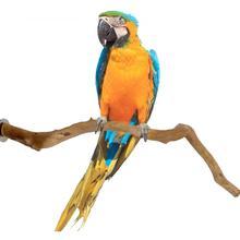 1 шт. 30 см попугая птица стоя ручкой Стенд виноградный деревянный столб жердочка для птицы натуральный виноградный клетка для птиц окуня для...