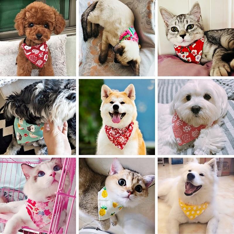 kitten collar (6)