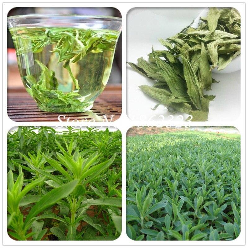100 yeni Stevia bonsai, Stevia otlar bitkiler yeşil ot, stevia rebaudiana Semillas bahçe dikim için çin ucuz bitki bitkileri