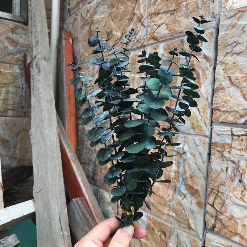 5Pcs Dried Natural Flower Forever Eucalyptus Branches Plants Leaves DIY Decor US