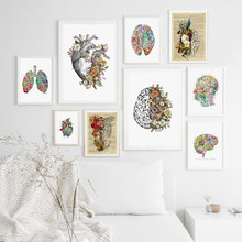 Anatomy Heart Brain Abstract Medical Wall Art Canvas Painting Print Nordic Posters and Prints Wall Pictures For Living Room(China)