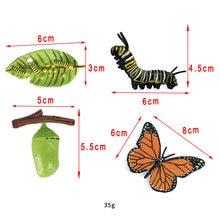 Escenario de crecimiento de insectos de plástico, mariposa realista, juego de modelos de ciclo de vida para niños, educación, fiesta temática de insectos, favores