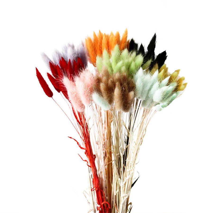 10 Cái/lốc Hoa Khô Tự Nhiên Nhiều Màu Sắc Lagurus Ovatus Thật Hoa Cho Gia Đình Trang Trí Đám Cưới Đuôi Thỏ Cỏ Chùm