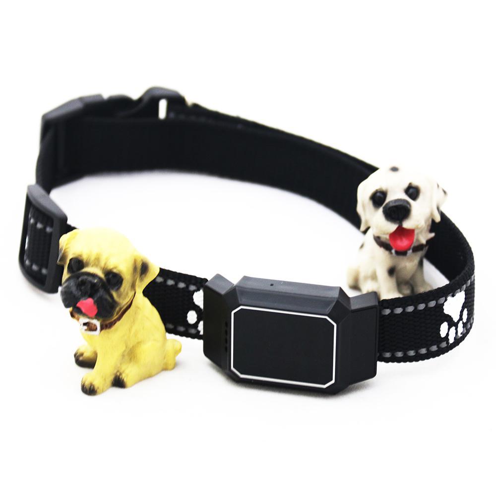 Animal de estimação gps gsm rastreador cão