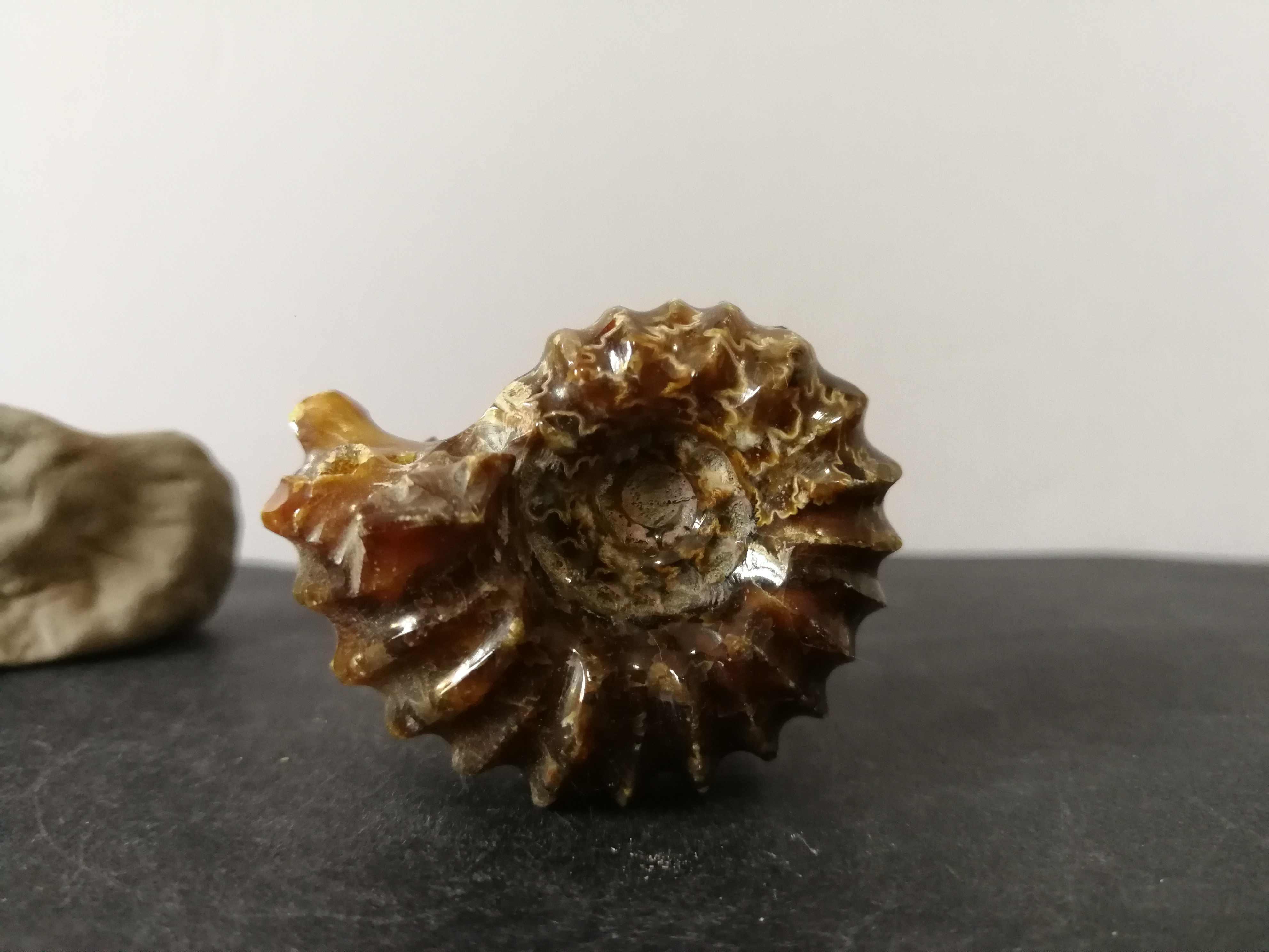 44.5 Gnatural Ammonite, Kristal Kuarsa Spesimen Energi Penyembuhan