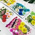 сухоцветы натуральные Маленький настоящие сухие цветы натуральные сухие растения для лампы в форме свечи эпоксидная смола кулон ожерелье ...
