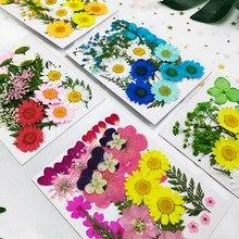 Petites plantes sèches de vraies fleurs séchées pour bougie résine époxy pendentif collier fabrication de bijoux artisanat bricolage Accessori