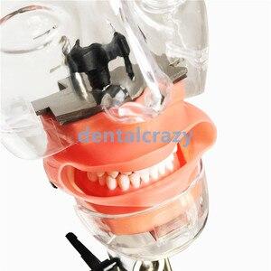 Image 3 - Dental simulator Nissin manikin phantom head Dental phantom head model with new style bench mount for dentist education