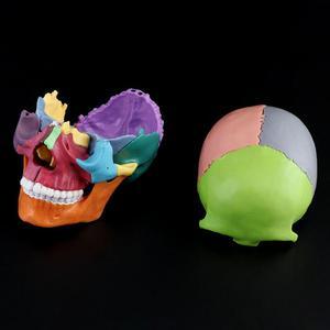 Image 3 - 15 sztuk/zestaw 4D zdemontowany kolorowa czaszka Model anatomiczny odpinany medyczne narzędzie do nauczania