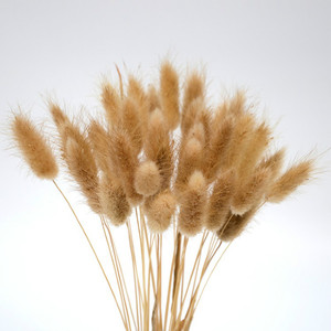 50 Stems Pampas Grass Dried Flower Bunny Tail Natural Plants Floral Rabbit Grass Bouquet Home Decoration Accessories(China)