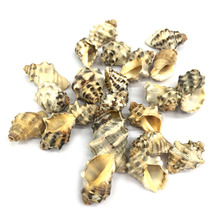 New Fashion Natural Shell Conch Pendants Charms for Jewelry Making Supplies DIY Bracelet Necklace Accessories 15x25mm