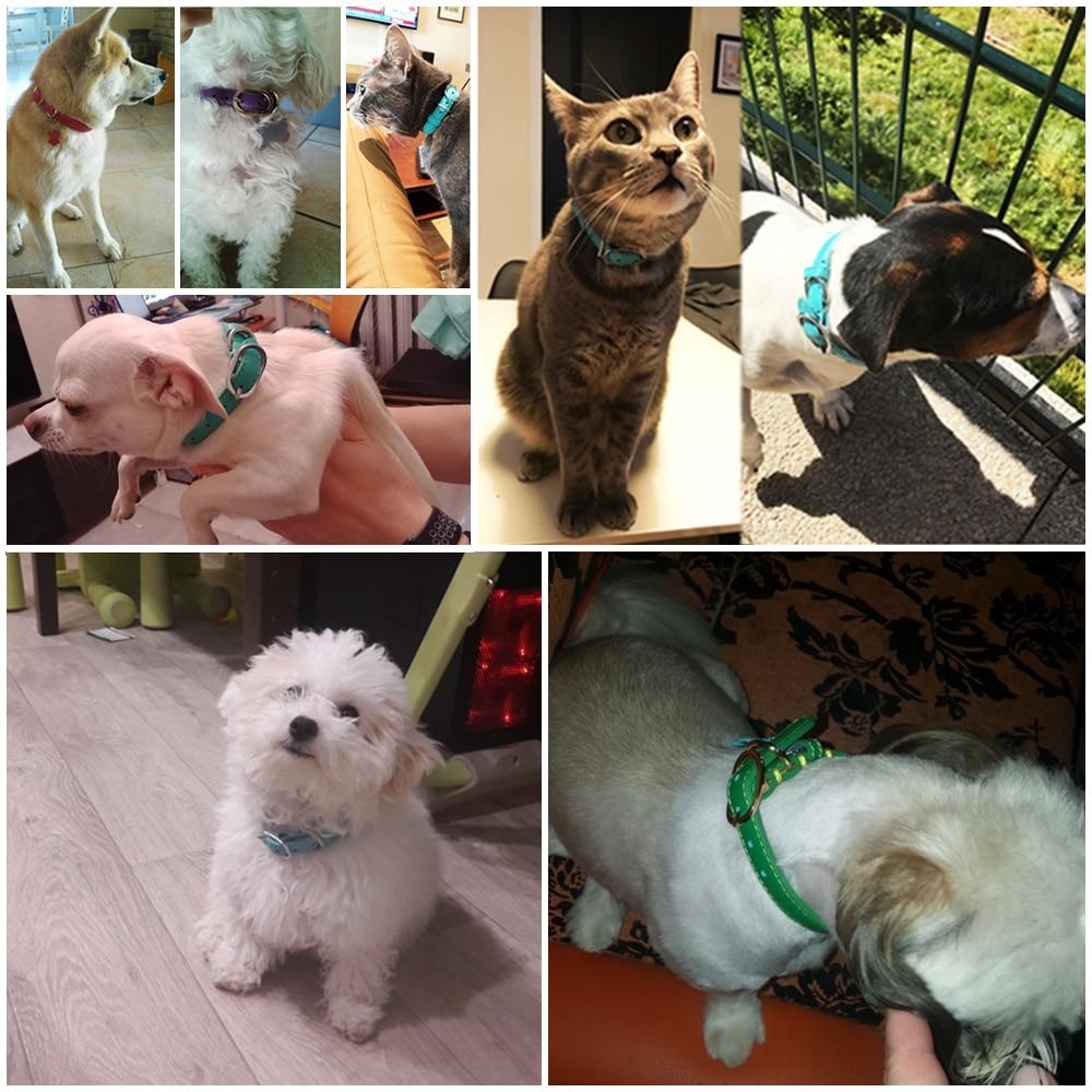 dog genuine leather collar (3)