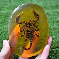 Chinese Collectible Rare Amber Innerlijke Inlay Animal Scorpion True Insect Exemplaren 150G