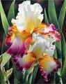 Íris flores contadas kits de ponto cruz cor diy bordado artesanal 14ct lona não impresso conjuntos ponto cruz