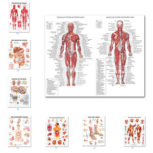 Muscular System Posters Silk Cloth Anatomy Chart Human Body School Medical Science Educational Supplies Home Decoration(China)