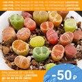 Литопсы СЕМЕНА Живые камни Лесландия (~15 семян)