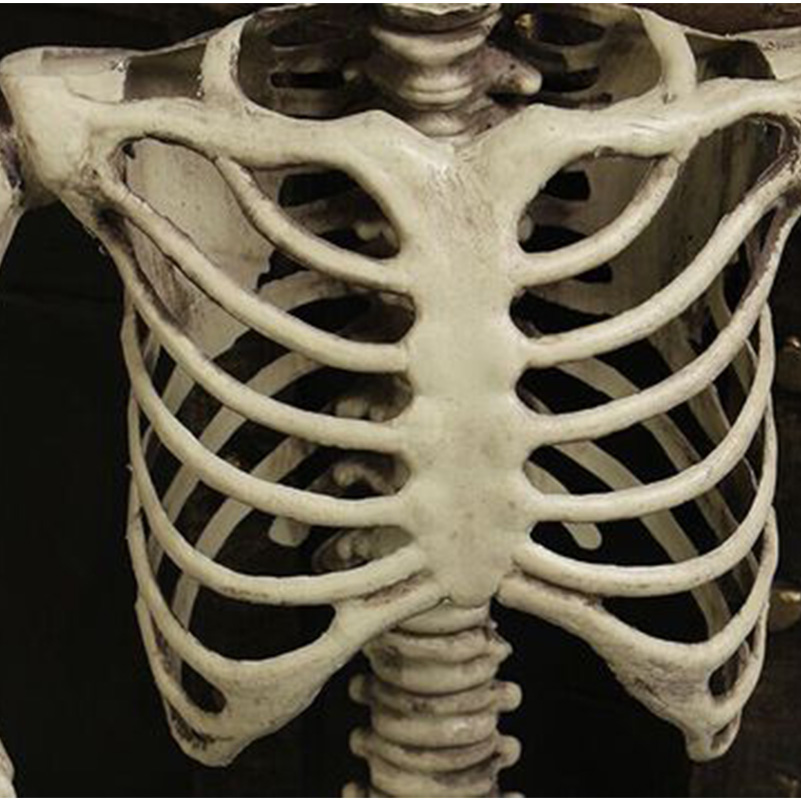Image 5 - 90cm Halloween Squelette Decoration For Haunted House 90cm Plastic Skull Skeleton For Bar Halloween Cosplay Skeleton Children-in Party DIY Decorations from Home & Garden