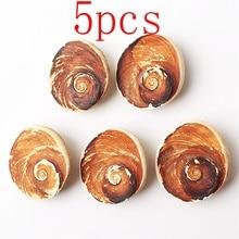 5pcs Natural Sun Shell Stone Fossil Pendant White Shell Screw Healing Gift недорого