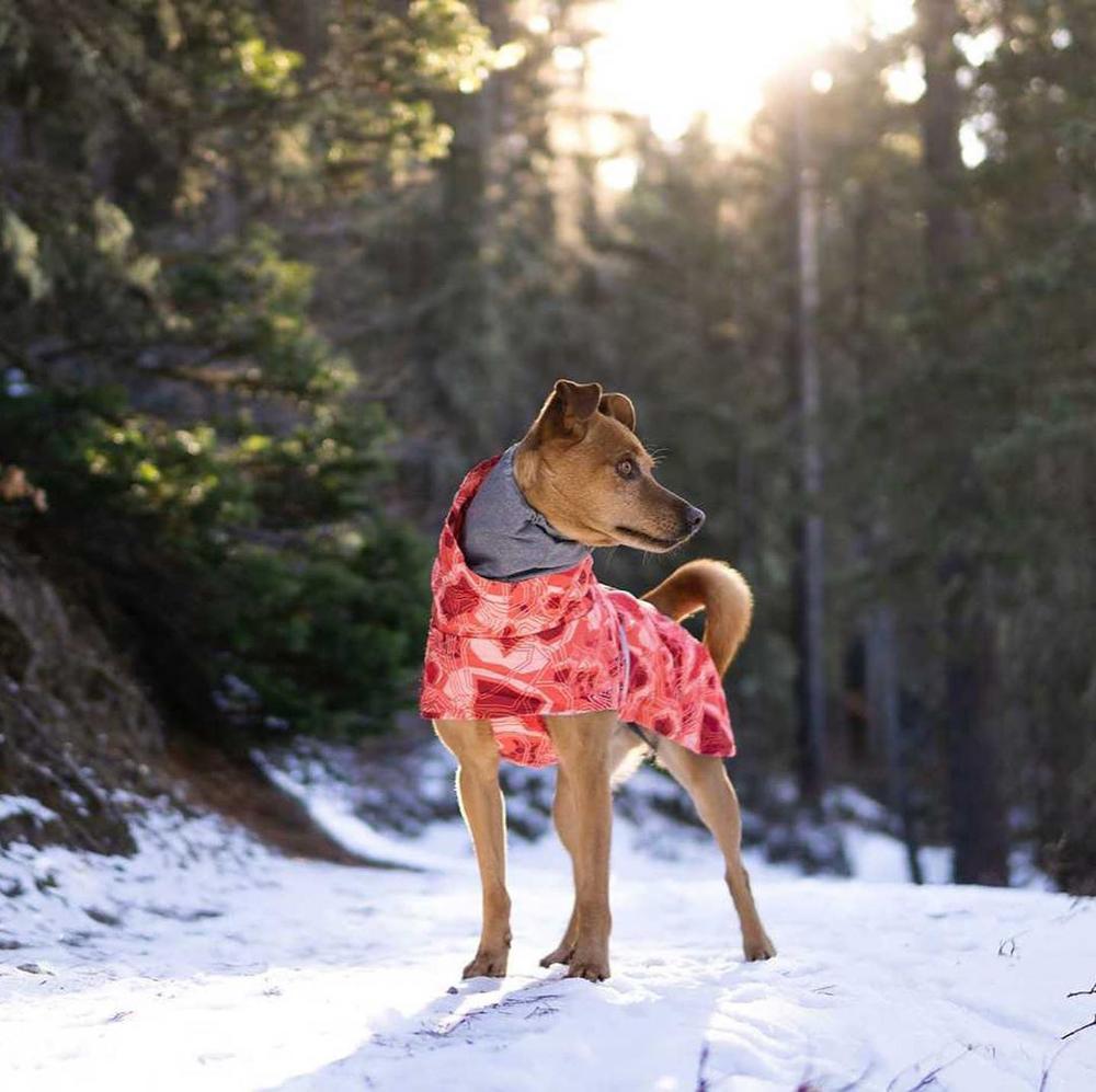 Одежда для собак, зимнее теплое ветрозащитное пальто, утепленная одежда для домашних животных, костюм для собак, комбинезон, куртка, лыжный костюм, товары для домашних животных, собак-3