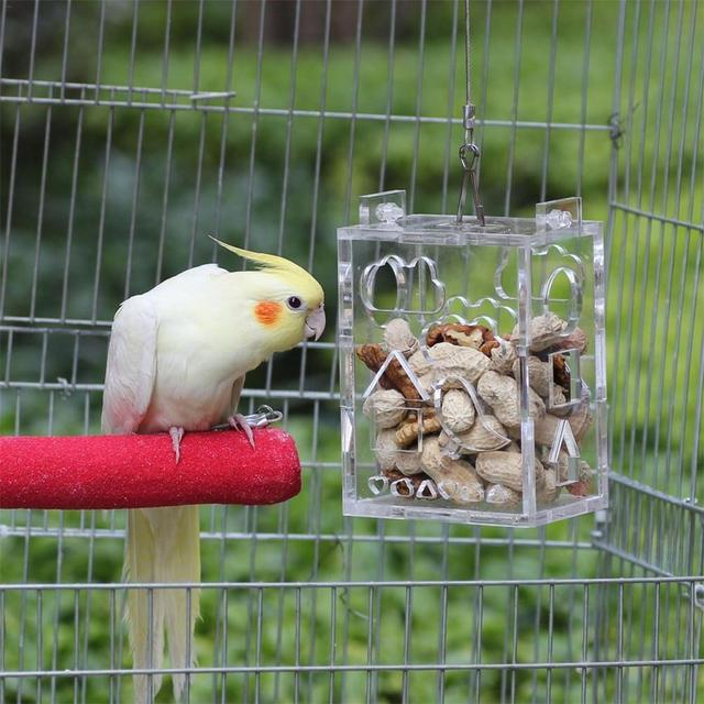 Parrot Foraging Toy Feeder Innovative Educational Acrylic Wire Rope Bird Chewing Toy For Intelligence Improving 4