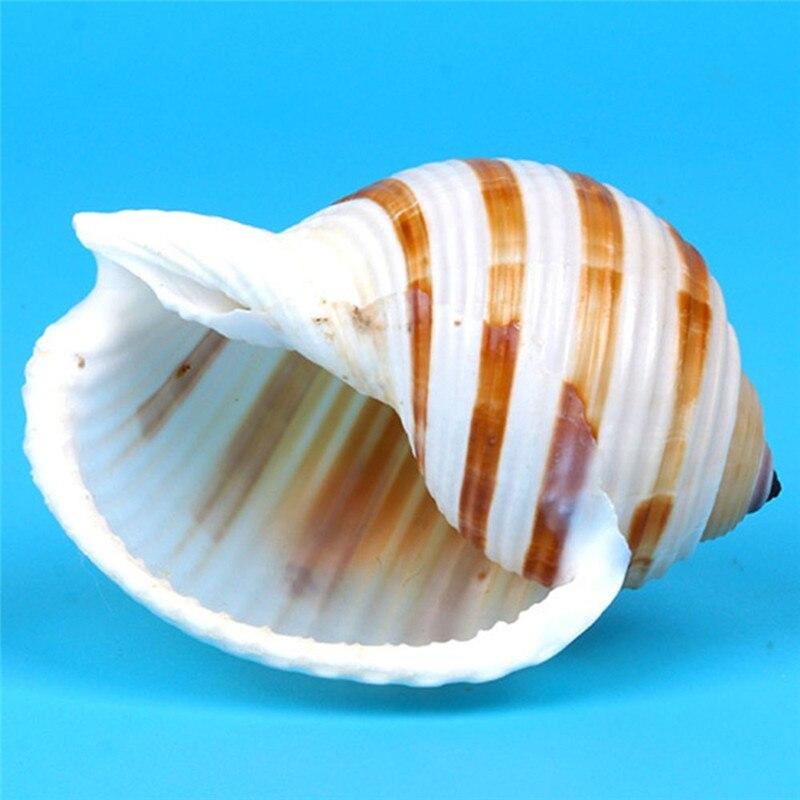 1 шт. натуральный полосатый ракушка Коралловая морская улитка, домашнее офисное украшение, аквариумный декорация ландшафт для аквариума