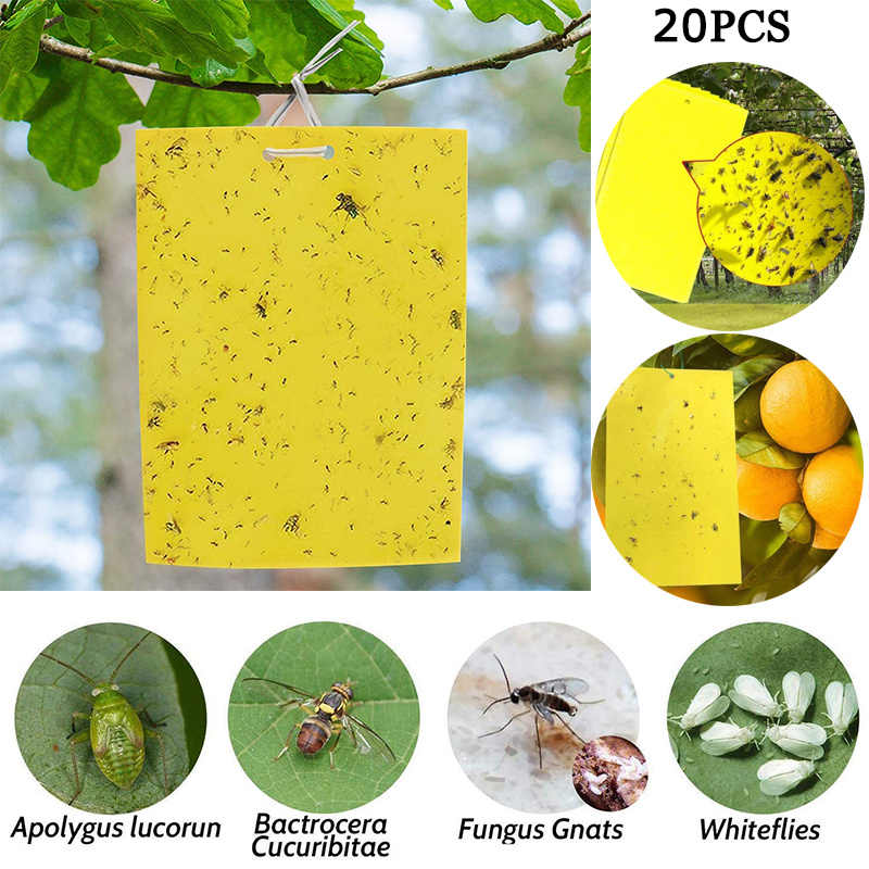 10 Sheets Fly Bug Mosquito Killer Insects Pest Catcher Fly Trap Sticker Board