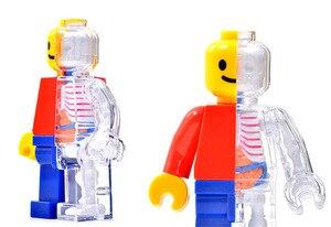 Image 3 - 4d Human Transparent Perspective Anatomical Skeleton Bone Model Puzzle Assembled Medical Toy