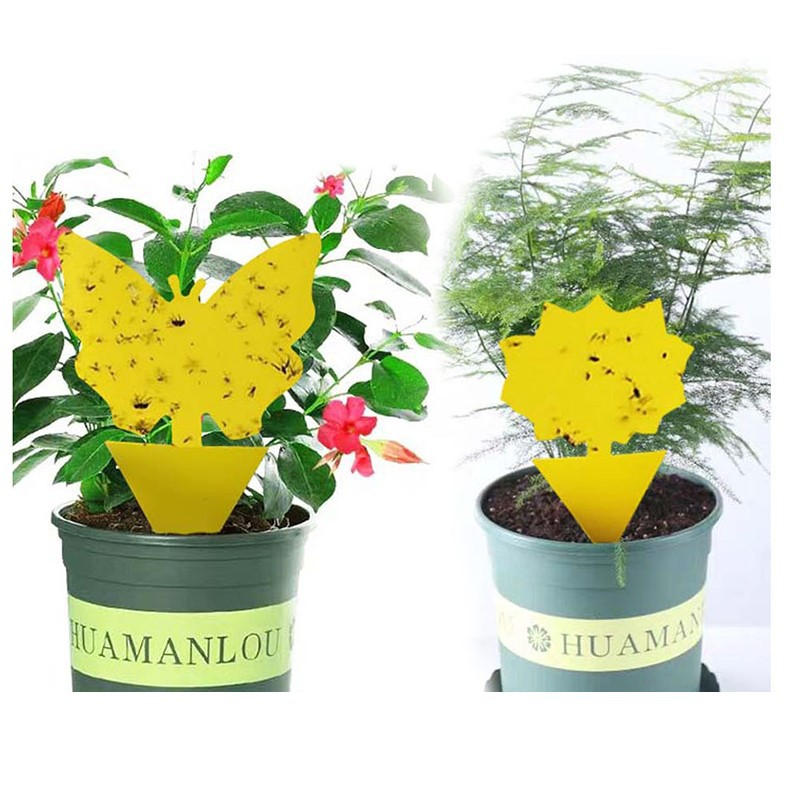 Yellow Butterfly Shaped Insect Pest Control Garden Strong Glue Plant Sticky Traps For Aphids Dual Sided Fruit Fly Fungus Gnats|Traps|   - AliExpress