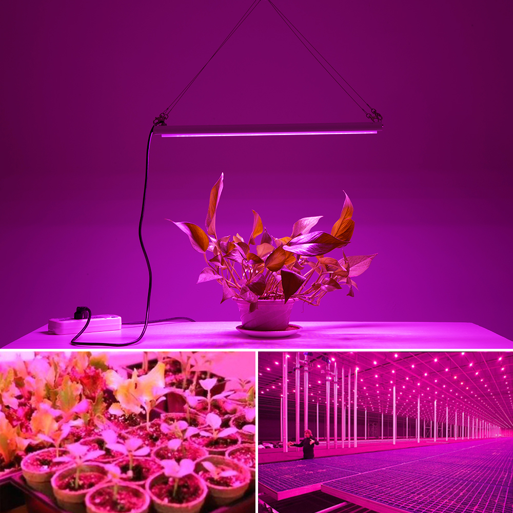 Image 5 - Phyto Lamp 80W LED Plant Grow Lights AC85 265V Full Spectrum High Luminous Efficiency Growing Lamps for Indoor Greenhouse Plants-in Power Cords & Extension Cords from Home Improvement