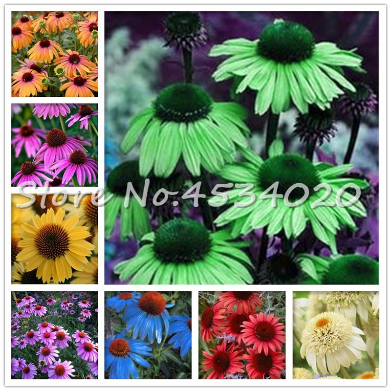 Mix Echinacea Outdoor Flower Plant Germinate Bonsai, 100 PCS Coneflowe Rare Long-bloom Coneflower Bonsai For Home Garden Decor
