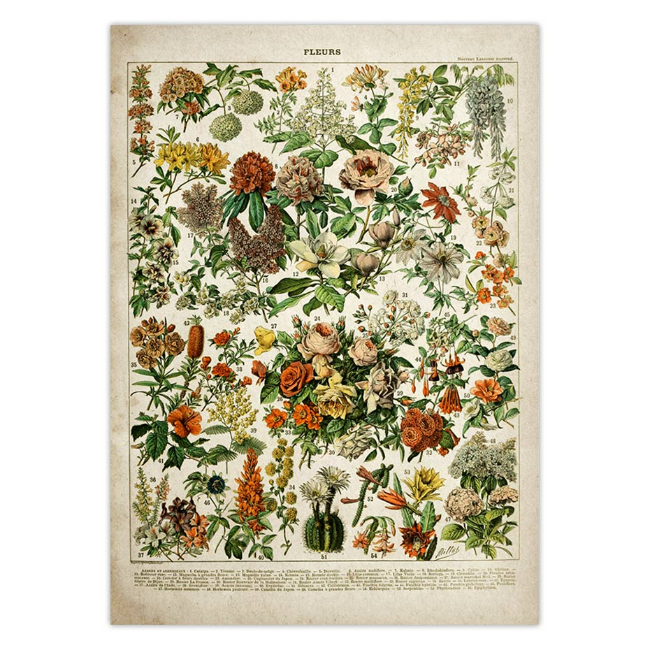 vintage flower poster antique floral print art botanical educational poster mushroom wall art home decor kraft paper