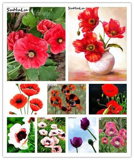 Hot Sale 100% Genuine Beautiful Poppy Bonsai Plant100pcs Various Colors Blooming Flowers Bonsais Plants DIY Home Garden Pot