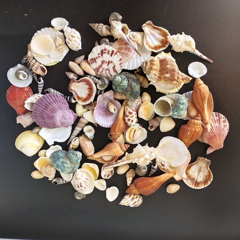 120PCS Mixed Conch Ocean Sea Shells Wedding Decor Beach Theme Party, Seashells Home Decorations, Fish Tank,Candle Making