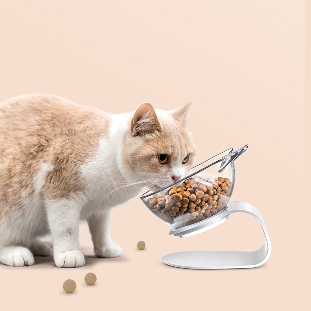 Non-Slip Single Cat Bowl With Raised Stand  My Pet World Store