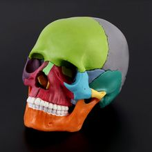 15 ピース/セット 4D 分解色スカル解剖モデル取り外し可能な医療教育ツール