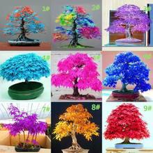 20 pçs japonês maple semente bonsai diy planta vaso de flores folhas coloridas criativo casa jardinagem decoração m15 21 dropship
