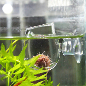 Glass Feeding Cup Fish Tank Feeder Brine Shrimp Eggs Red Worms Food For Aquarium