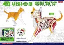 4D animal model orange cat model organ anatomy assembly model decoration medical teaching aids magnified testicle model anatomy testicle model