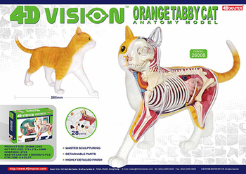 цена на 4D animal model orange cat model organ anatomy assembly model decoration medical teaching aids