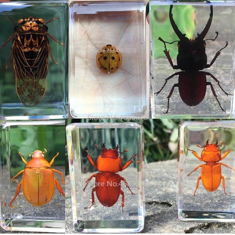 1 peça joaninha inseto espécime cicada em resina clara educacional explorar instrumento material de ensino escolar 44x29x18mm