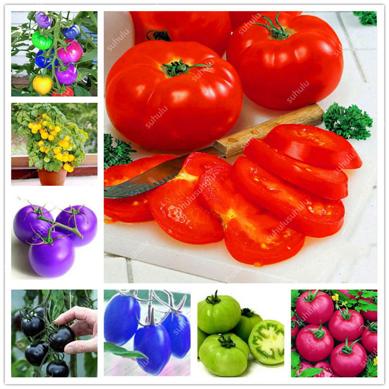 200 Pcs Extra-tasty Tomato Bonsai,Delicious Sweet Cherry Tomato Organic Fruit Vegetable Edible Food Balcony Potted Garden Plant