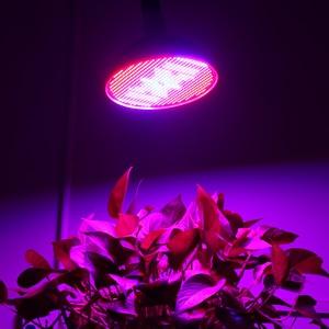 Image 5 - (4 יח\חבילה) 800 נוריות לגדול אור 80W E27 E40 ספקטרום מלא צמח מנורת לגן מקורה צמחים Vegs הידרופוני מערכת צמח אור
